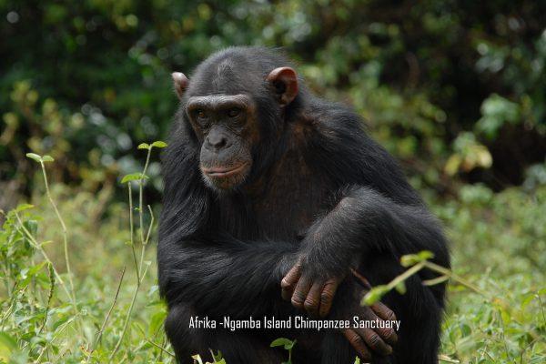 afrika-news