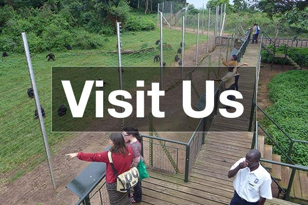 Visit Ngamba Island