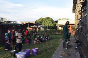 Feeding the Chimps