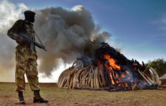 ivory burn