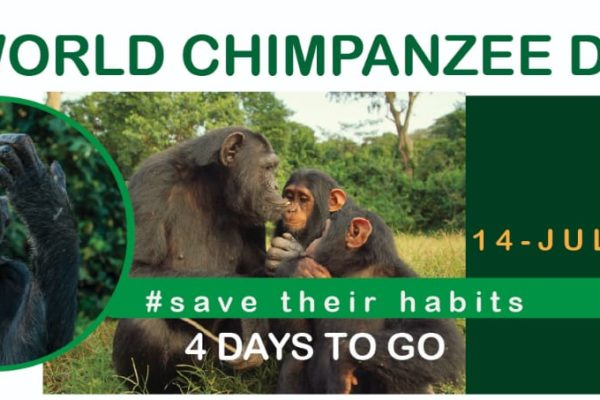 world chimpanzee day