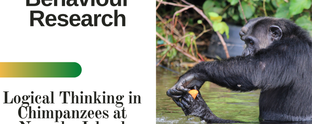 Logical thinking of chimpanzees at Ngamba island